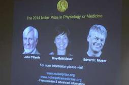 Les Nobel de Médecine localisent  notre « GPS » du cerveau