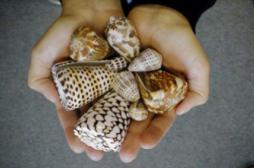 Antidouleur : le venin d'un escargot marin plus puissant que la morphine