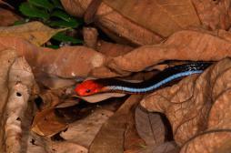 Douleur : les vertus insoupçonnées du venin de serpent corail