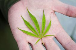 Cannabis thérapeutique : la Colombie donne son feu vert