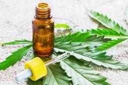 Cannabis thérapeutique : des patients créent un collectif pour en réclamer la légalisation