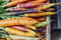 Lutte contre la pollution : le ministre de la Santé indien préconise de manger des carottes