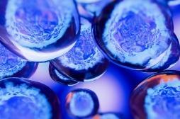 Le fonctionnement des cellules souches se dévoile un peu plus