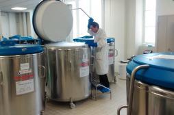 Thérapie cellulaire : le magasin des cellules souches