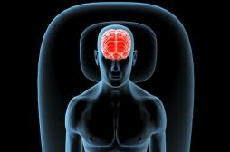 Cerveau : des chercheurs expliquent comment les souvenirs se forment