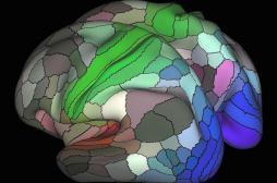 Cerveau : 97 nouvelles zones cartographiées