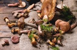 Cerveau : les champignons protégeraient du déclin cognitif