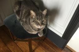 Covid : on peut effectivement contaminer son chat