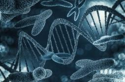 Quel est le rôle du chromosome Y ?