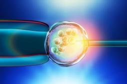 Infertilité masculine : un singe naît grâce à la transplantation de tissus testiculaires congelés