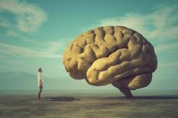 Pourquoi on peut opérer le cerveau sans douleur