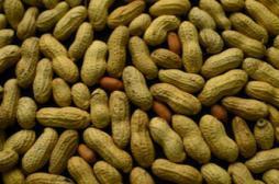Maladies cardiovasculaires : noix et cacahuètes diminuent les risques