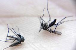 Dengue : le vaccin de Sanofi autorisé aux Philippines