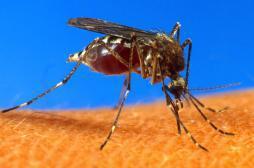 Paludisme : Microsoft met au point un drone anti-moustique