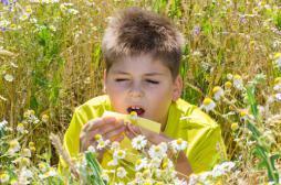 Allergies : le sud doit faire face au retour des pollens