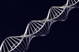 ADN : l'alphabet du vivant enrichi par...