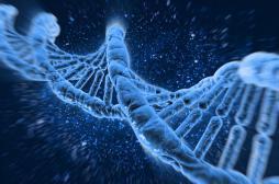 Une modification génétique fait paraître plus vieux que son âge