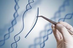 Myopathie de Duchenne: les ciseaux génétiques pour réduire la progression de la dystrophie musculaire