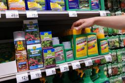 Cancer : l'OMS disculpe le glyphosate