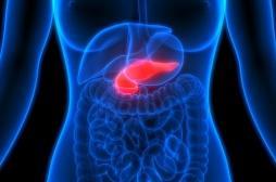 Cancer du pancréas : comment les cellules cancéreuses modifient leur environnement