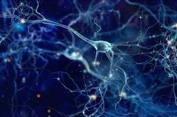 La vitamine E est excellente pour le développement cérébral
