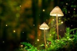 Etats-Unis : dépénalisation de champignons hallucinogènes pour lutter contre la dépression