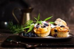 Cannabis comestible : des souris moins actives