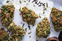 Cannabis thérapeutique: un malade sur deux déclare en avoir consommé avant de conduire