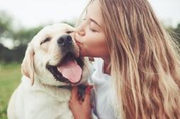 Coronavirus : les animaux de compagnie pas concernés mais pas sans risque