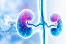 Polykystose rénale: un traitement prometteur pour cette maladie génétique incurable