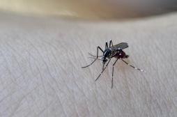 Dengue: un nouveau cas détecté à Bergerac, faut-il s'inquiéter?