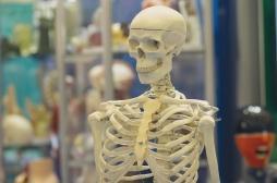 Une bactérie intestinale perturbe la croissance des os