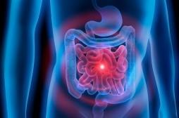 Stress, addictions, Alzheimer : et si les solutions venaient de notre intestin ?