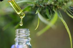 Le cannabis permet de prévenir et combattre le mal de ventre