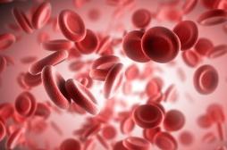 Journée mondiale de l'hémophilie : ces 4 idées reçues sur la maladie sont fausses