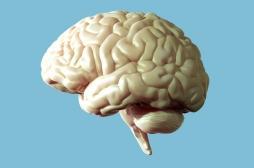 Grâce au cortex, notre cerveau écarte les distractions pour rester concentré