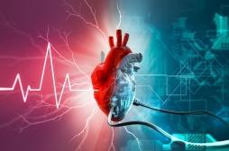 Un coeur artificiel s'adapte aux besoins des patients de façon autonome