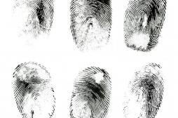 Empreintes digitales : elles sont la clé du toucher