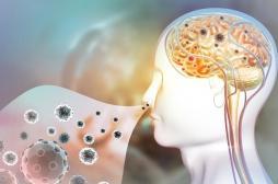 Covid-19 : comment le virus atteint-il le cerveau ?