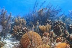 Les éponges de mer au secours du traitement contre le cancer?