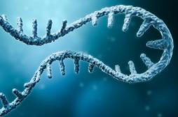 Vaccin contre le cancer : les essais sur l'être humain ont commencé