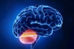 Prise de décision instantanée : la région du cerveau impliquée identifiée