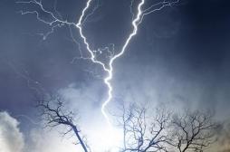 Une fillette tuée en Mayenne par la chute d'une branche pendant un orage