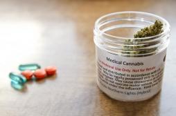 Cannabis thérapeutique : un peptide par voie orale diminuerait les effets secondaires
