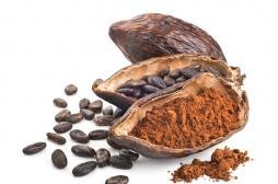 Cacao : un composant de ses fèves stimulerait la mémoire