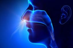 La muqueuse du nez, cible prioritaire du Covid-19