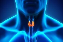Derrière l'affaire Levothyrox… il y a la thyroïde !