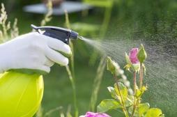 Pesticides : le nouveau ministre de l'Agriculture accusé d'être un lobbyiste