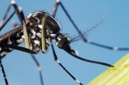 Moustique tigre : la santé de tous les Français en danger