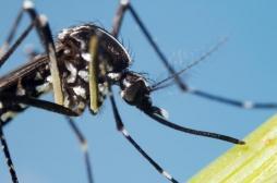 Pour lutter contre la prolifération de moustiques tigres, des communes installent des colonies de chauves-souris